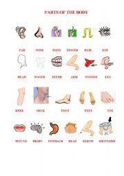 English Worksheet: PARTS OF THE BODY PICTIONARY