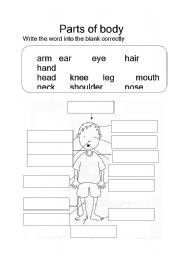 English Worksheet: part of the body