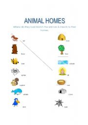 English Worksheet: Animal Homes