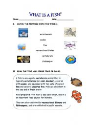 English Worksheets: What is a fish?