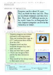 English Worksheet: PENGUINS