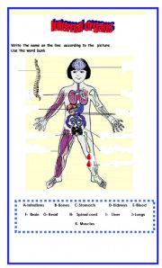 English Worksheets: Identify the internal organs