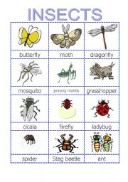 insect pictionary esl worksheet by paperone0503. Black Bedroom Furniture Sets. Home Design Ideas