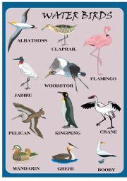 English Worksheets: WATER BIRDS