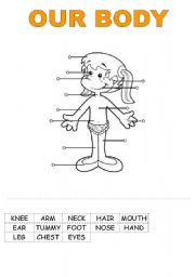 English Worksheets: OUR BODY