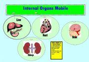 English Worksheet: Speaking Internal Organs Mobile 2 pages