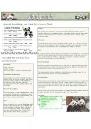 English Worksheets: Giant Panda