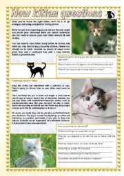 English Worksheets: New kitten questions