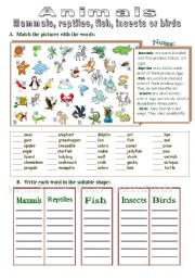 English Worksheet: Mammals, reptiles, fish, insects or birds