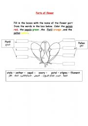 English Worksheet: parts of flower
