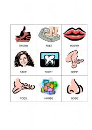 English Worksheet: Body Bingo