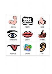 English Worksheet:  4 Body Bingo cards