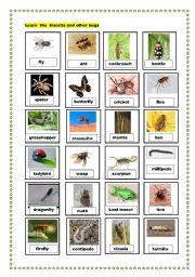 English Worksheets: insects and other bugs