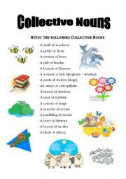 Collective Nouns - worksheet by nordynour