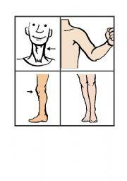 English Worksheets: Flashcards body parts