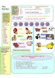 English Worksheets: Gender of the Nouns