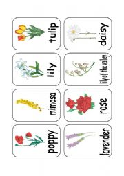 English Worksheet: CLIL: TEACHING FLOWERS 3/3 - PICTURES
