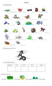English Worksheet: ANIMAL - CLASSIFICATION