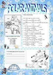 English Worksheets: Polar animals activites (3/3)