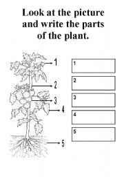 parts of a plant - ESL worksheet by kerem