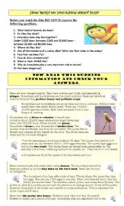 English Worksheet: BEE MOVIE GUIDE AND ACTIVITIES