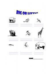 English Worksheets: Big or Little