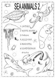 English Worksheets: SEA ANIMALS 2