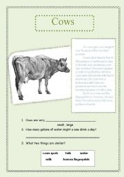 English Worksheets: cows