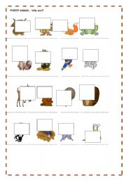 English Worksheets: FOREST ANIMALS 2