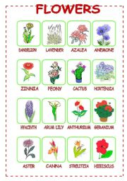 English Worksheet: Flowers (3/3)