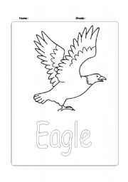 English Worksheets: Eagle