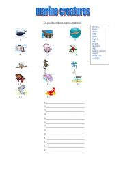 English Worksheets: marine creatures