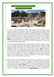 English Worksheet: 3 pages- A TRIBE FACED WITH EXTINCTION: THE UNTOUCHED INDIANS-READING , LISTENING AND VOCABULARY ACTIVITY -BOTH INFORMATIVE AND POPULAR TOPIC  (1/2)