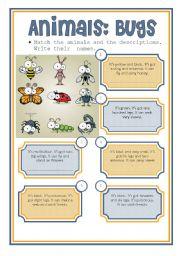 English Worksheets: animals: bugs