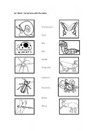 Insects - worksheet by mnoya