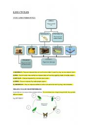 English Worksheet: THE LIFE CYCLES AND VERTEBRATES AND INVERTEBRATES