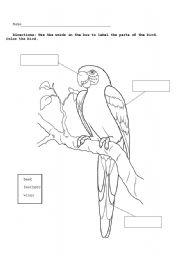 english worksheets parrot diagram. Black Bedroom Furniture Sets. Home Design Ideas