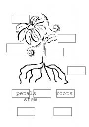 English Worksheet: parts of a flower