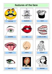 English Worksheets: features of the face
