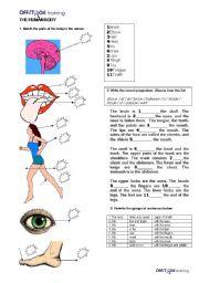 English Worksheet: The Human Body_Prepositions_Sentence Writing