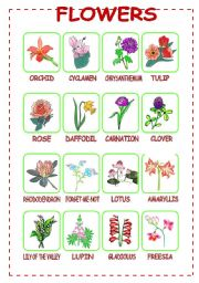 English Worksheet: Flowers (2/3)