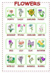 Flowers (1/3)