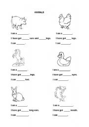 what have the animals got and what can they do esl worksheet by ahmetsedef. Black Bedroom Furniture Sets. Home Design Ideas