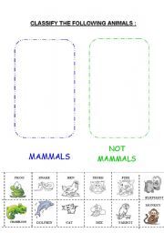 English Worksheet: MAMMALS