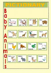 English Worksheets: Baby Animals