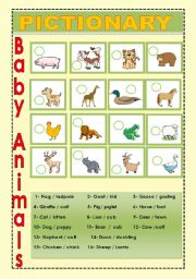 English Worksheet: Baby Animals 3