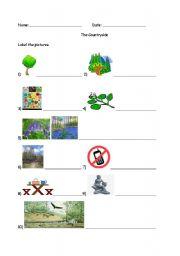 English Worksheet: Countryside Vocabulary