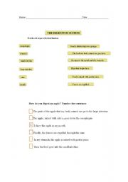 English Worksheets: The digestive system