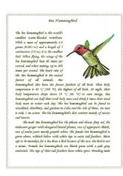 English Worksheets: Hummingbird