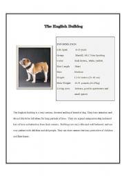 English Worksheets: The English Bulldog
